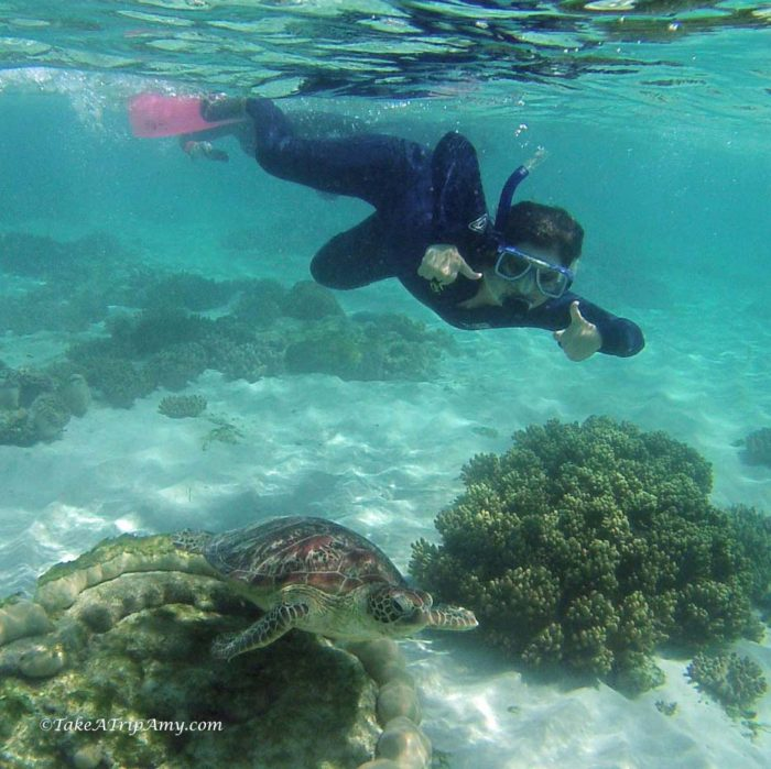 Snorkeling with Turtles at Mackay Reef, TNQ, Australia