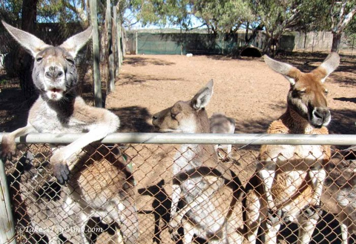Greenough Wildlife and Bird Park, Western Australia - Take a Trip Amy