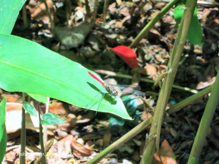 Cairns Botanical Gardens, QLD, Australia