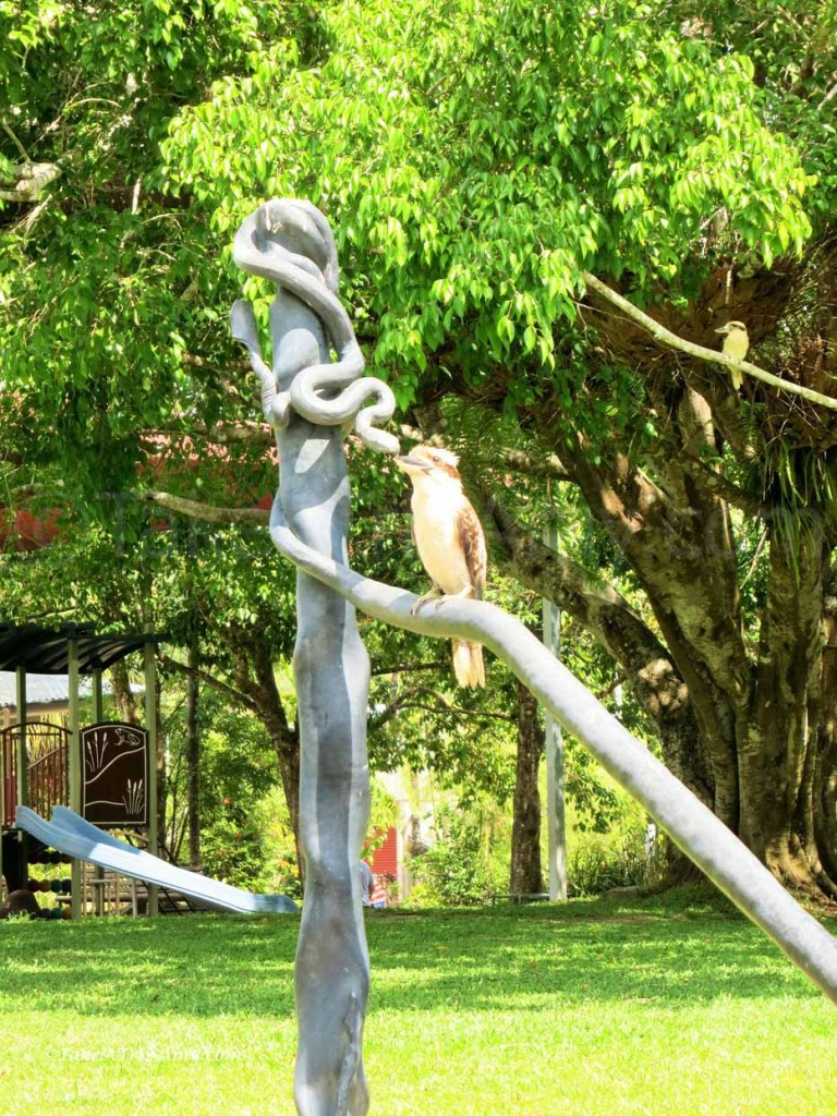 kookaburra, Kuranda, QLD, Australia