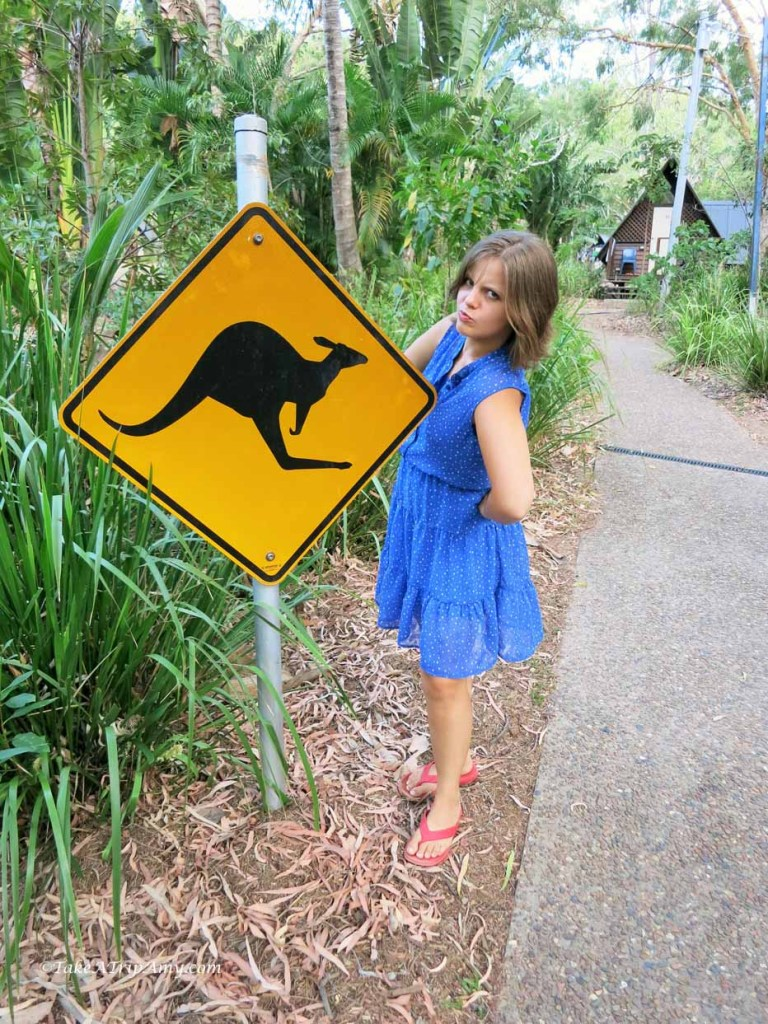 Being Silly at Bungalow Bay Koala Village