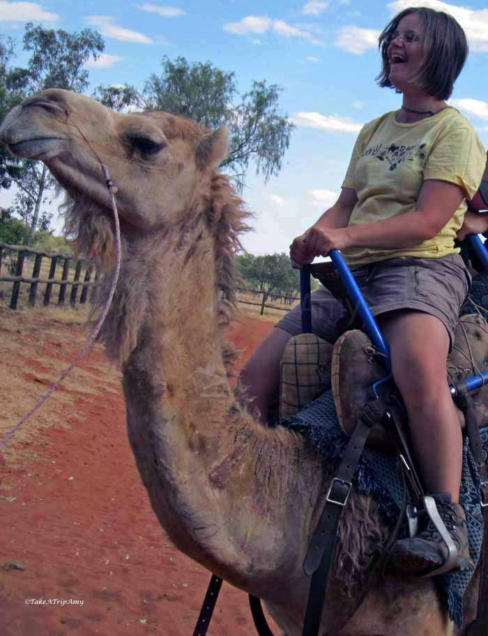 Flossy The Racing Camel