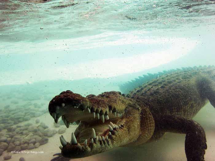 Alice Springs Reptile Centre, Northern Territory , Austalia