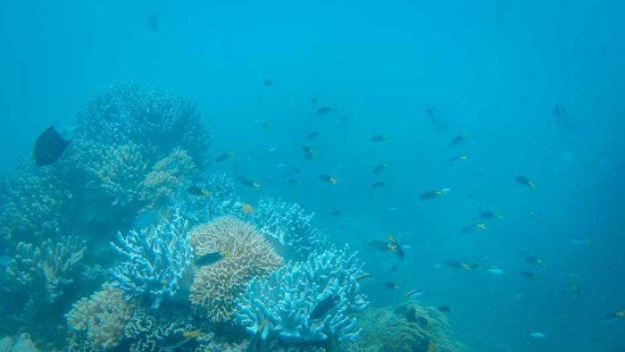 Snorkeling the Great Barrier Reef at the Whitsunday Islands Australia