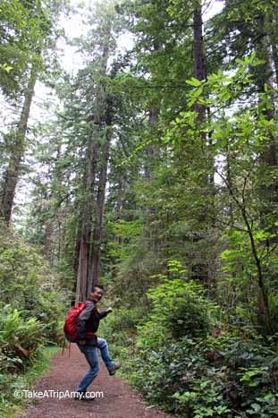 alifornia's Redwoods: Lady Bird Johnson Grove Trail, United States