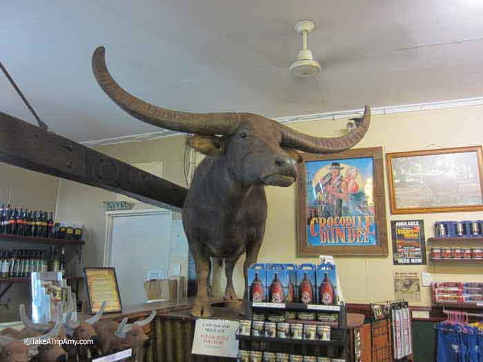 Charlie the Buffalo at Adelaide River Inn (as featured in Crocodile Dundee), Norther Territory, Australia