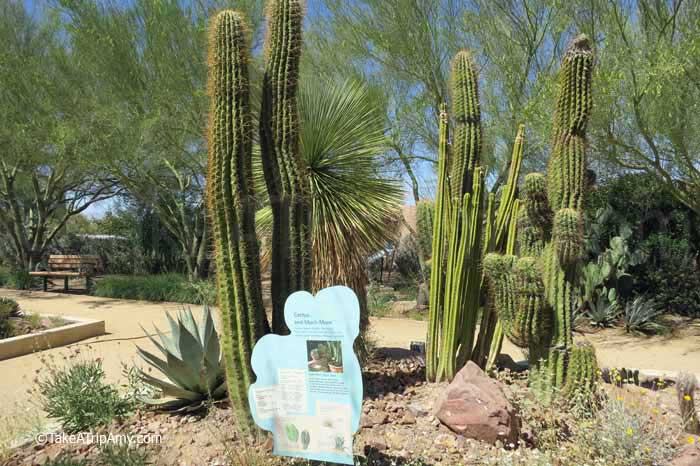 Mojave Desert cacti and succulent plants in the Botanical Garden at Springs Preserve in Las Vegas, Nevada , USA -Take a Trip Amy